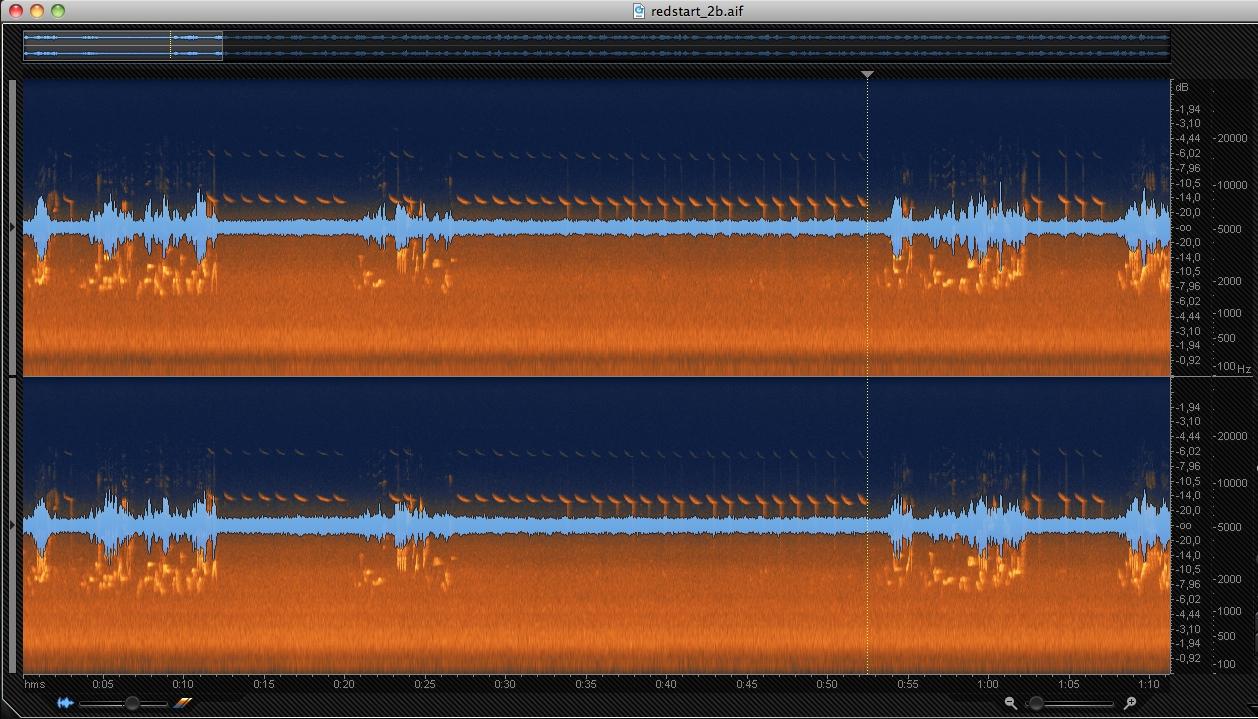 XC391868 Soundscape :: xeno-canto